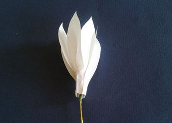 Best Out of Waste Paper Flower