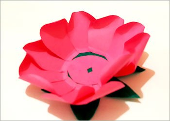Pink petals arranged on lotus