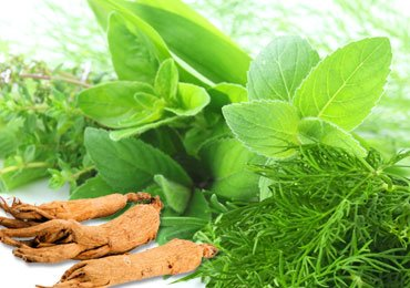 Herbs For Weight Loss You Cannot Afford to Overlook!