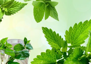 10 Amazing Beauty Benefits of Mint Leaves That You Won't Believe!