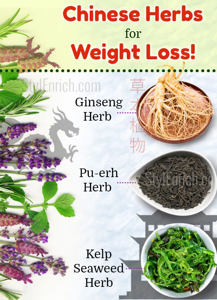 cichorium intybus herb for weight loss