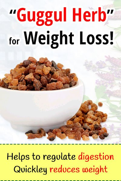 The Guggul Herb For Weight Loss