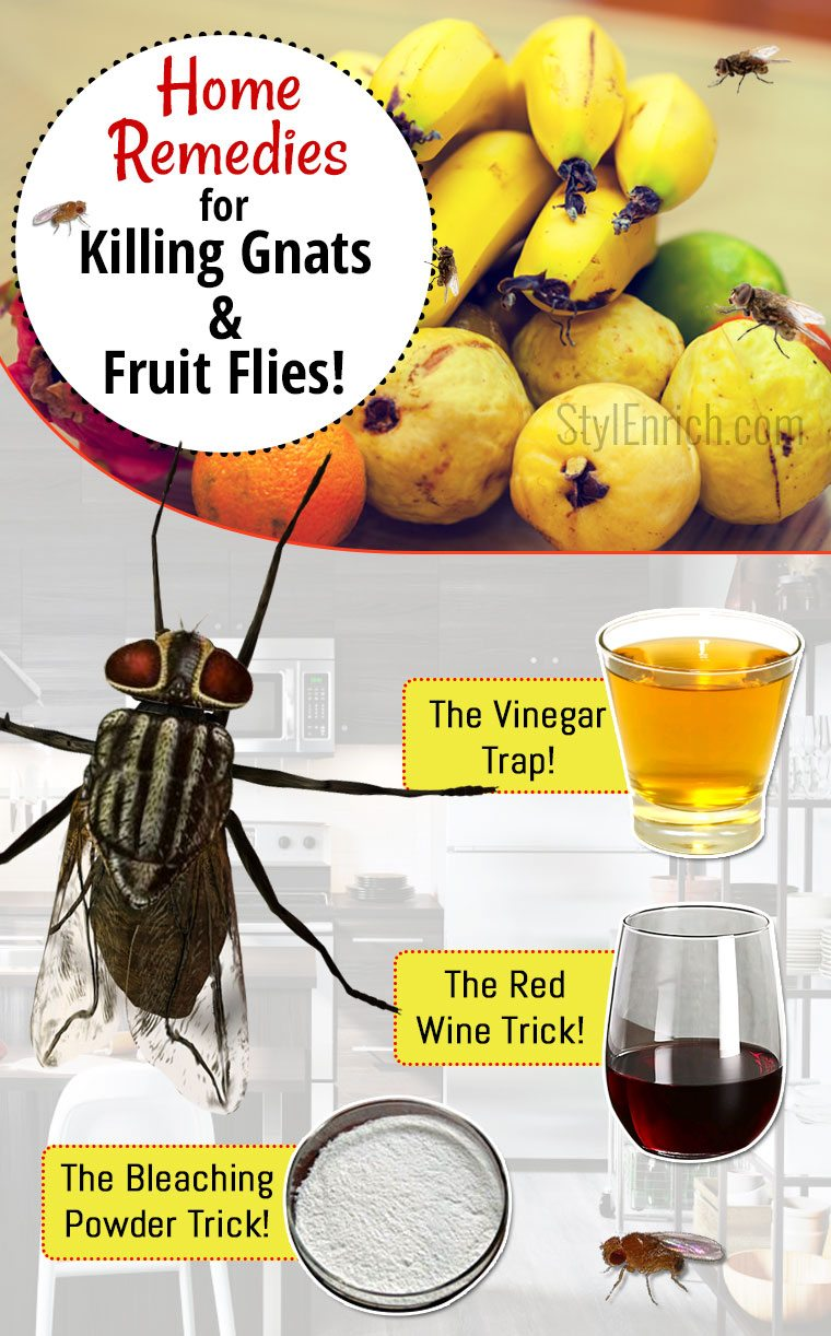 how to get rid of gnats fruit flies using simple home remedies. Black Bedroom Furniture Sets. Home Design Ideas