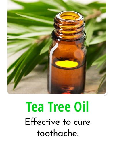 Tea Tree Oil for Toothache