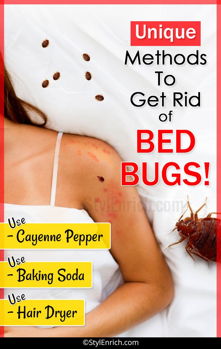How To Get Rid Of Bed Bugs Let S See Unique Methods