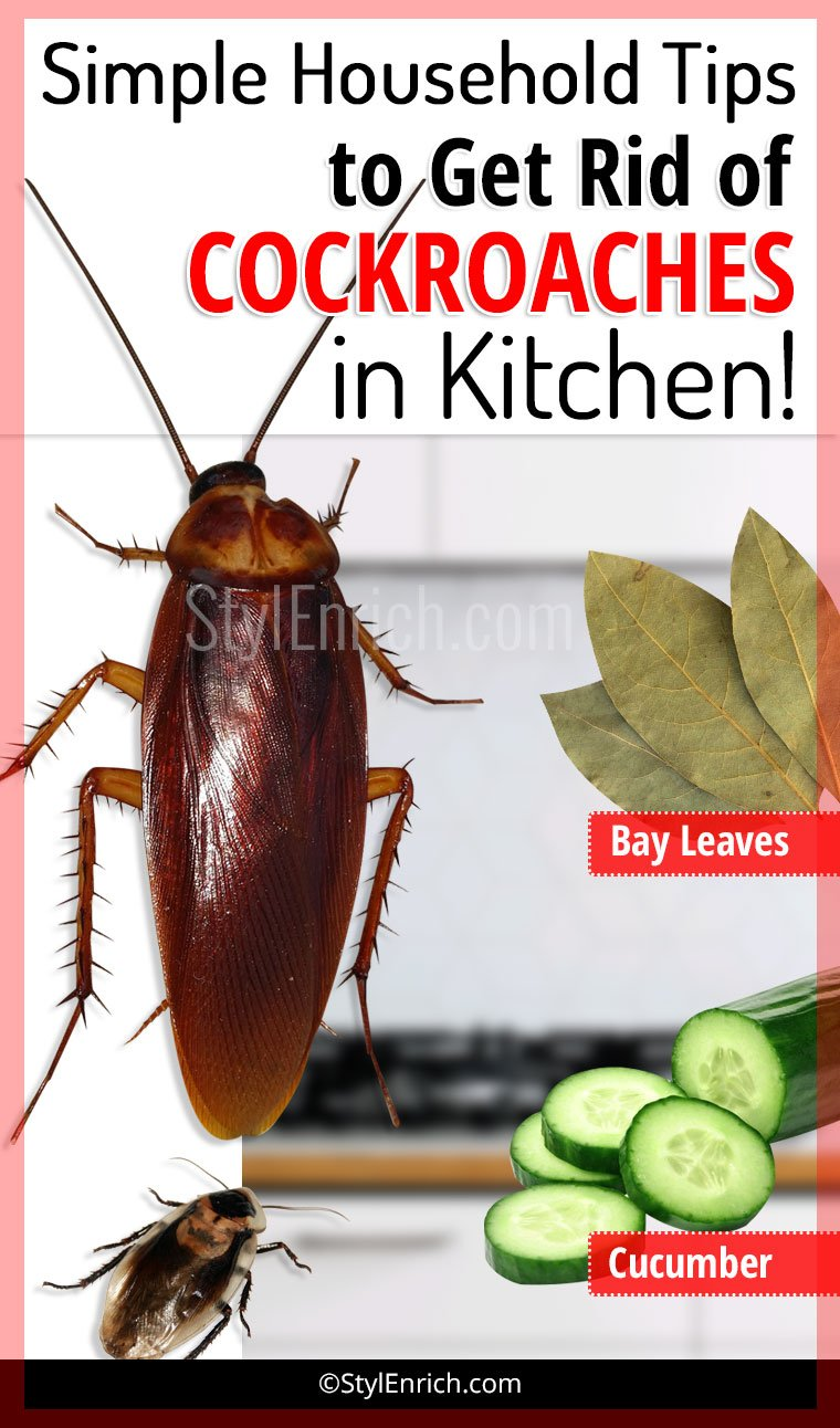 How To Get Rid Of Cockroaches In Kitchen Using Simple