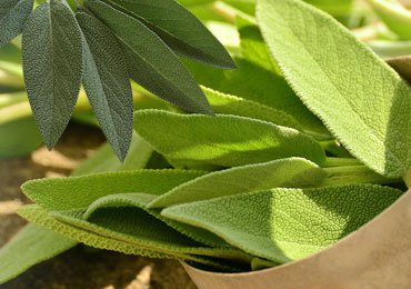 Why Sage is Considered to Be a Miracle Herb?