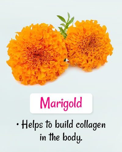 Marigold For Chickenpox