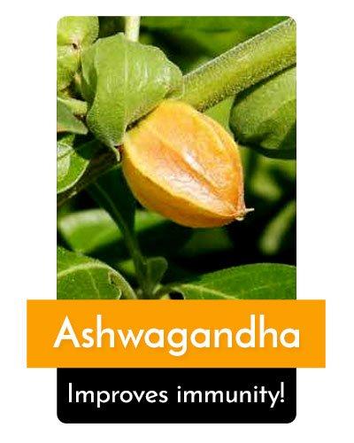Ashwagandha Herb For Energy