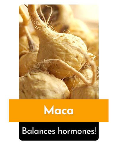 Maca Herb For Energy