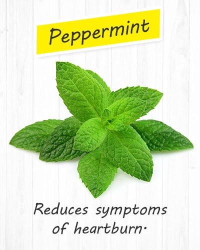 Peppermint For Gastritis