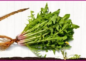 Health Benefits of Dandelion Root