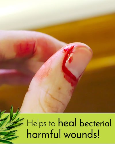Tea Tree Oil Antibacterial Benefits