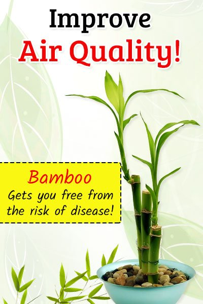 Bamboo To Improve Air Quality