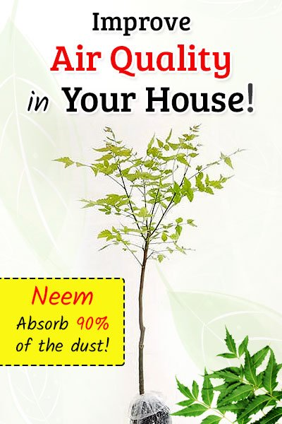 Neem Plant To Improve Air Quality
