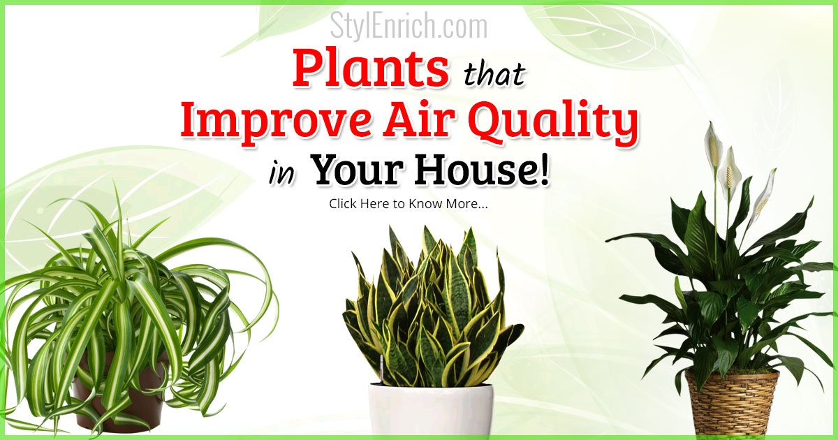 Air Purifying Plants Plants That Improve Air Quality In
