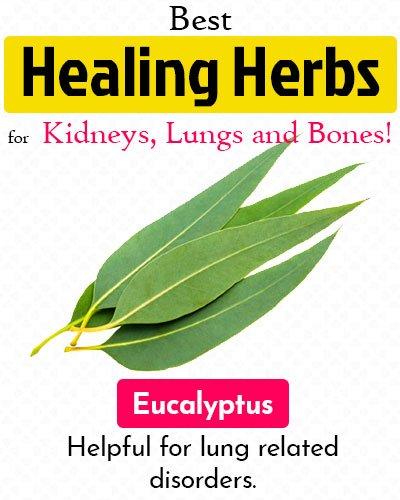 Eucalyptus Healing Herb