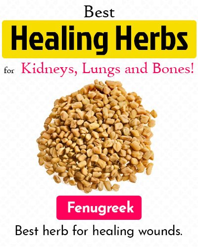 Fenugreek Healing Herb