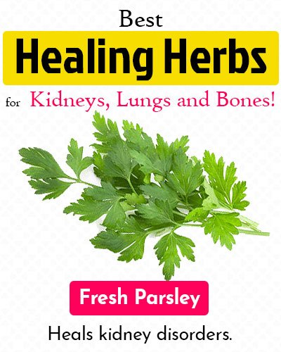 Fresh Parsley Healing Herb