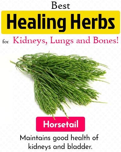 Horsetail Healing Herb