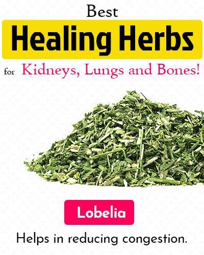 Lobelia Healing Herb