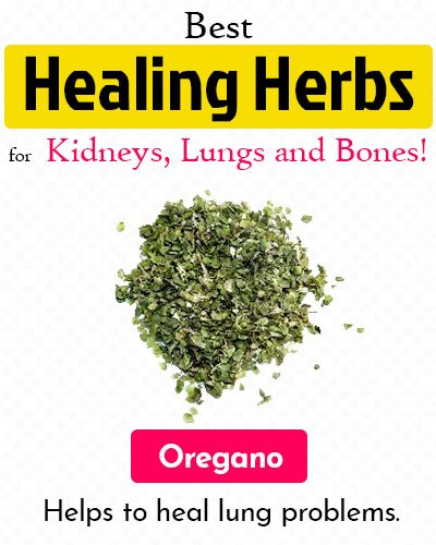 Oregano Healing Herb