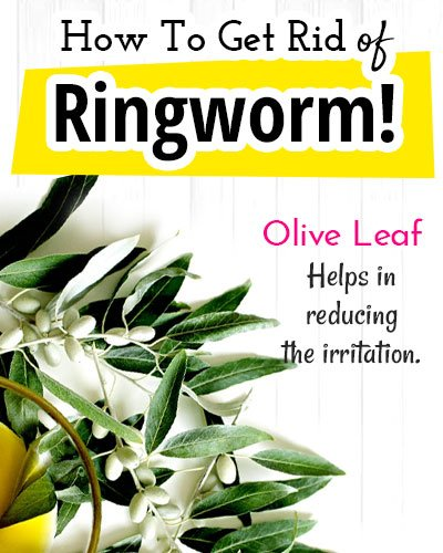 Olive Leaf for Ringworm