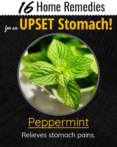 Peppermint For Upset Stomach
