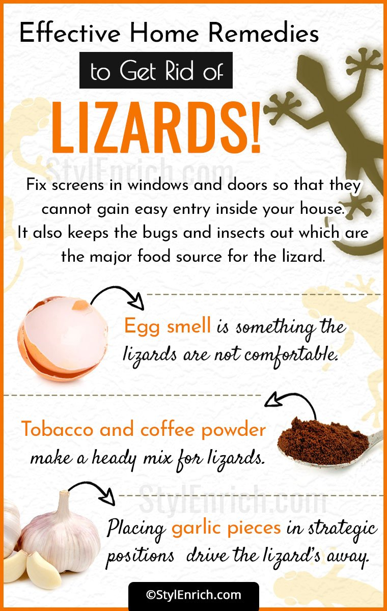 How To Get Rid Of Lizards?