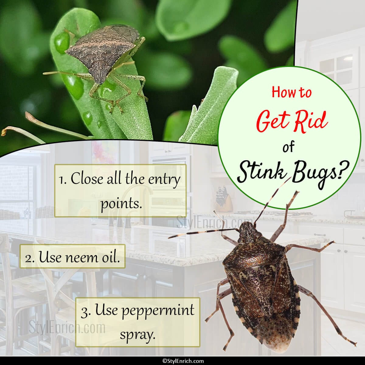 how to get rid of stink bugs let 39 s get an idea. Black Bedroom Furniture Sets. Home Design Ideas