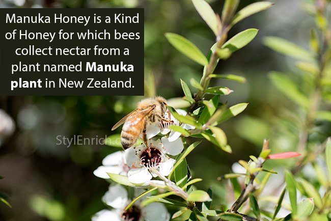 How Manuka Honey is Made by Bees in New Zealand