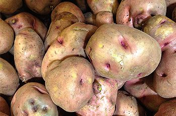 Benefits of Potato for Hair Skin and Health